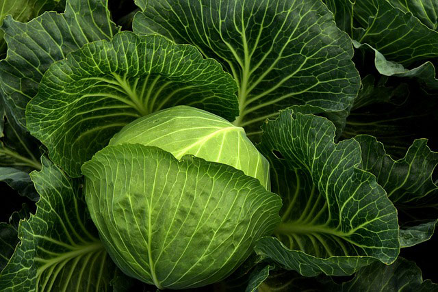 5 ways to include cabbage in your meals