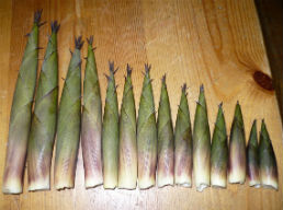 8-reasons-to-eat-bamboo