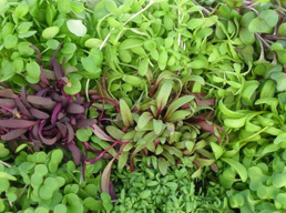 All that you need to know about microgreens
