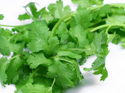 Coriander Green winner all the way