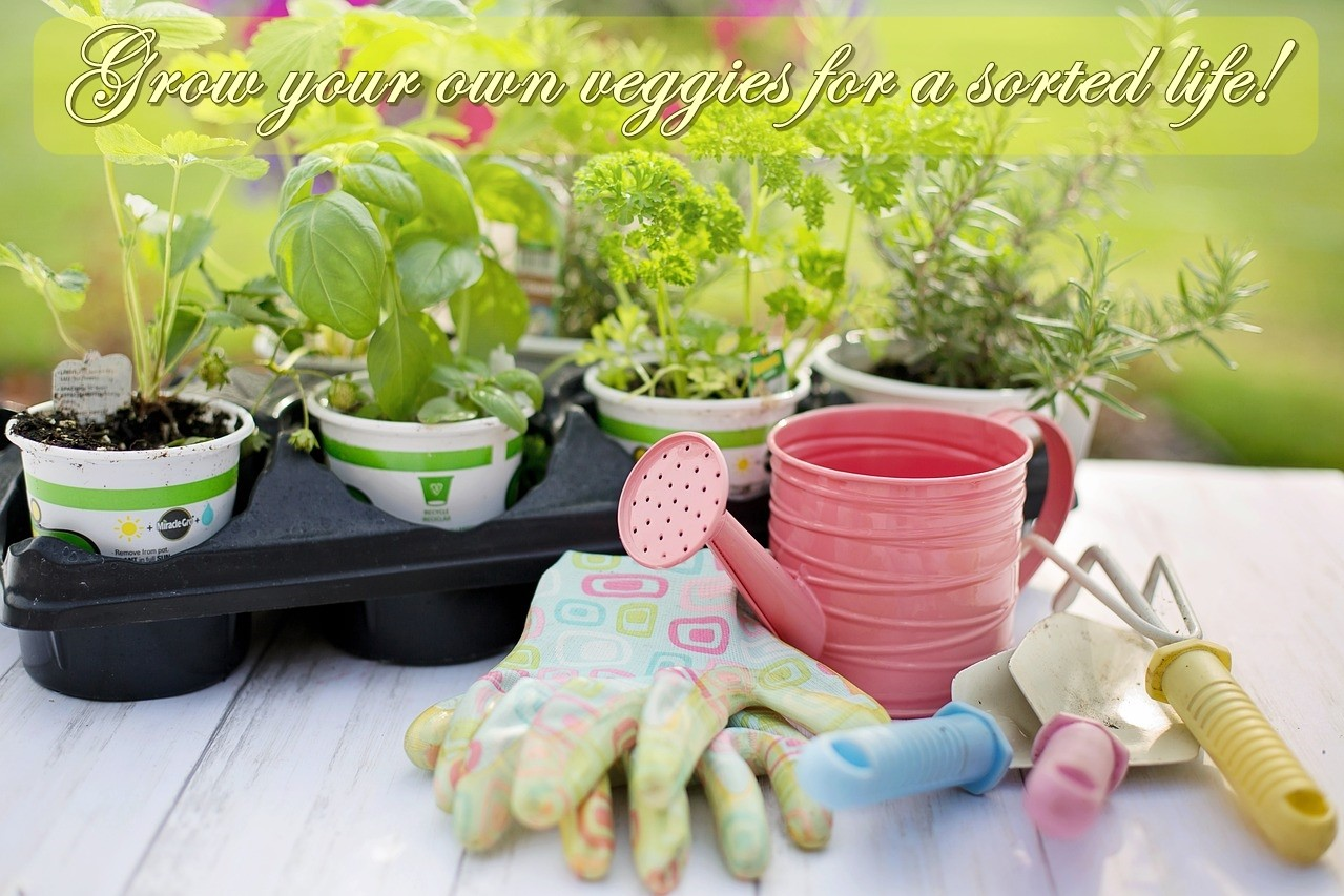 Grow your own veggies for a sorted life